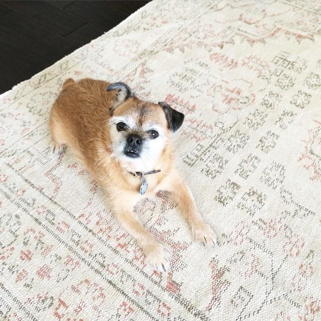 准备一块宠物专用地毯