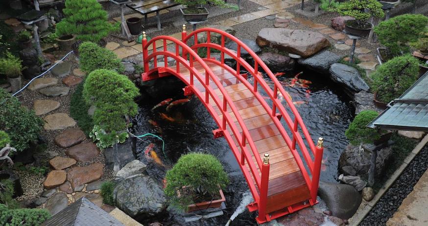 专访日本盆景大师(三)