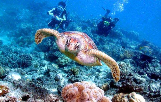 壁纸 海底 海底世界 海洋馆 水族馆 650_410