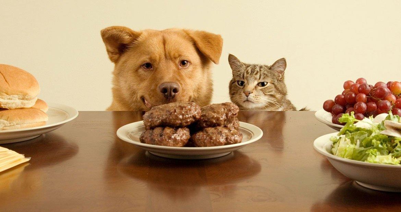 家有爱宠:不要给宠物吃的17种食物(上)