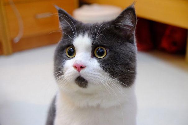 爱猫人士看过来 形态各异的喵星人!!
