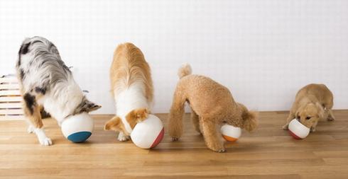 讓狗狗不再狼吞虎咽的不倒碗:Oppo Food Ball