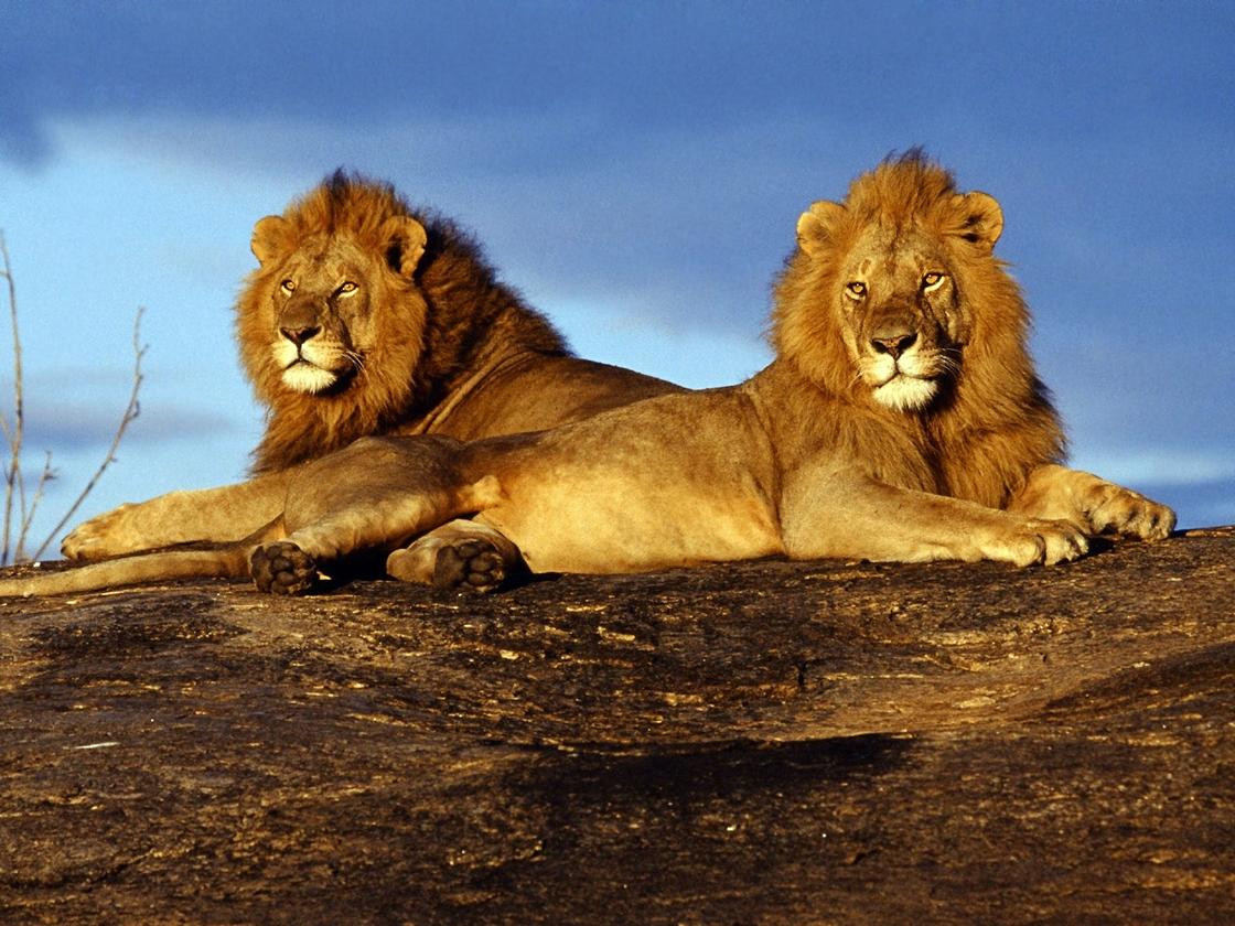 爱旅游 | 到肯尼亚去 感受野性的呼唤