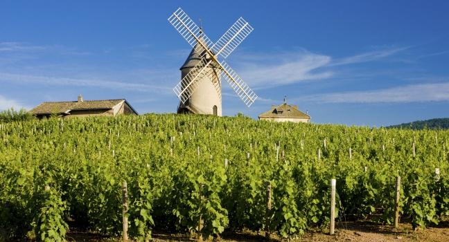 爱旅游 | 勃艮第:浪漫醉人的葡萄酒圣地
